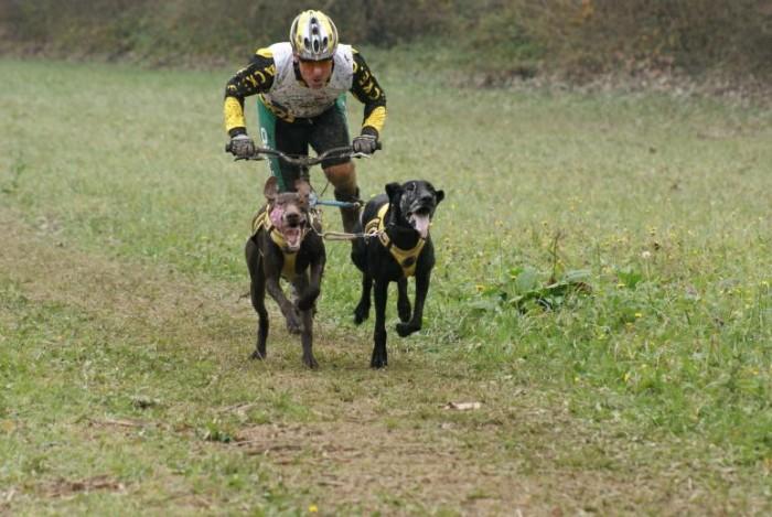...koloběžka a dva psi...