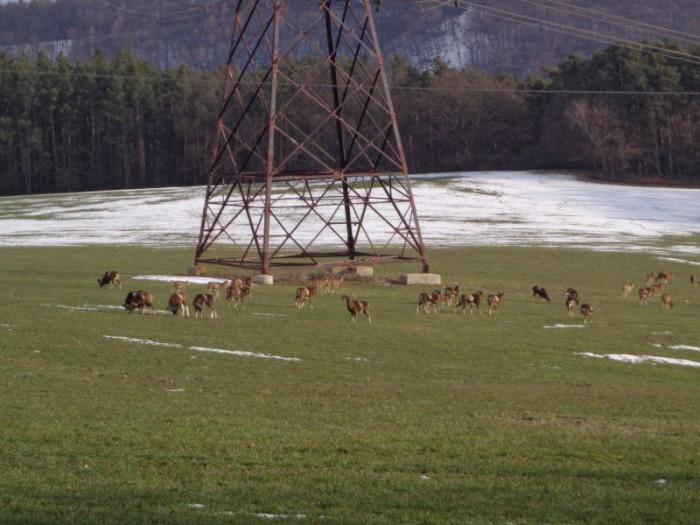 Kromě asfaltu sledovali borci i okolí - zde stádo muflonů?